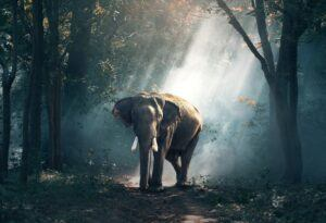 an african elephant in light coming through the leaves